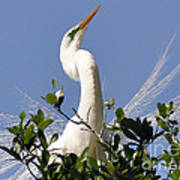 White Egret In Spring Art Print