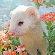 White Ferret Art Print