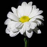 White Flower Print by Gennadiy Golovskoy