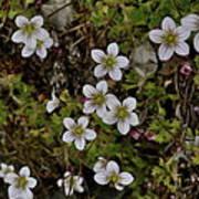 White Flowers And Moss Art Print