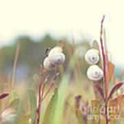 White Garden Snail Art Print