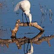 White Heron In The Looking Glass Art Print