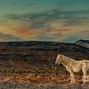 White Horse At Sunset Art Print