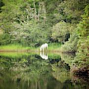 White Horse Drinking Water Art Print