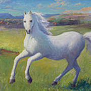 White Horse Art Print by Gwen Carroll