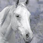 White Horse In Lavender Pasture Art Print
