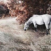 White Horse Art Print by Jelena Jovanovic