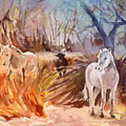 White Horses And Bull In The Camargue Art Print