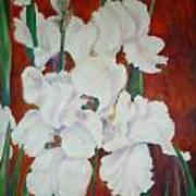 White Irises Art Print