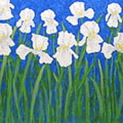 White Irises Art Print