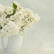 White Lilac In A Cream Jug Art Print