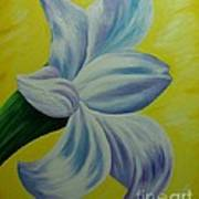 White Lilly Art Print