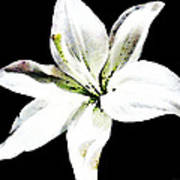 White Lily - Elegant Black And White Floral Art By Sharon Cummings Art Print
