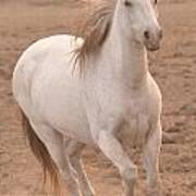 White Mare Approaches Number One Close Up Muted Art Print