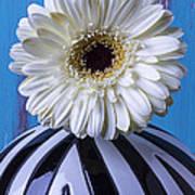 White Mum In Striped Vase Art Print