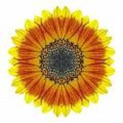 Orange And Yellow Sunflower I Flower Mandala White Art Print