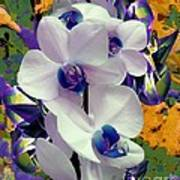 White Orchids With A Touch Of Purple Art Print by Doris Wood