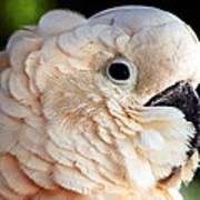 White Parrot Art Print
