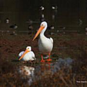 White Pelican Visitors To Gilbert Arizona Art Print