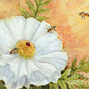 White Poppy And Bees Art Print