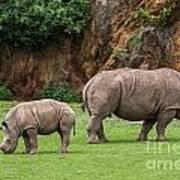 White Rhino 11 Art Print