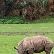 White Rhino 14 Art Print