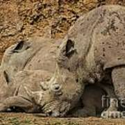 White Rhino 2 Art Print