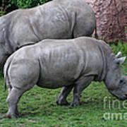 White Rhinoceros Art Print