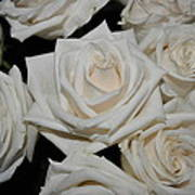 White Rose 1 Art Print