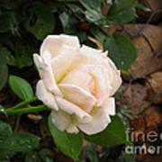 White Rose Green Oleo Art Print