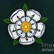 White Rose Of York Art Print