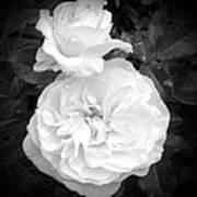 White Rose You Are Heavenly Art Print