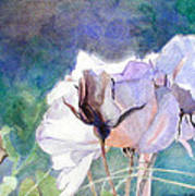 White Roses In The Shade Art Print