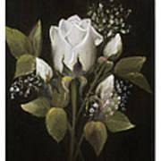 White Roses Art Print by Nancy Edwards