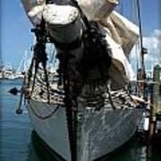 White Sail   Art Print