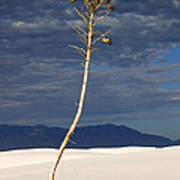 White Sands National Monument 2 White Sands New Mexico Art Print