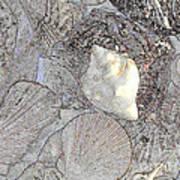White Shell Art Print