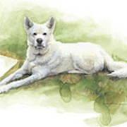 White Sled Dog Lying On Grass Watercolor Portrait Art Print