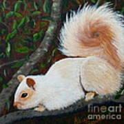 White Squirrel Of Sooke Art Print