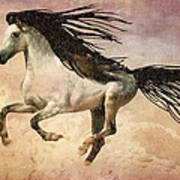 White Stallion Running Free  Art Print