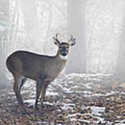 White Tailed Deer Buck In The Mist Art Print
