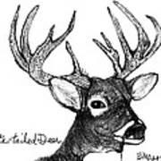 White-tailed Deer Head Art Print