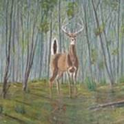 White-tailed Deer - Impressionistic Art Print