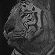 White Tiger At Night Art Print