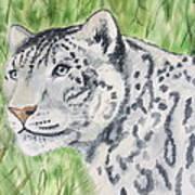 White Tiger Too Art Print