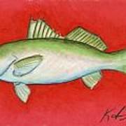 White Trout Art Print