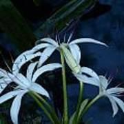 White Water Flower Art Print
