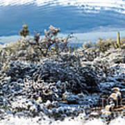 White Winter In The Desert Of Tucson Arizona Art Print