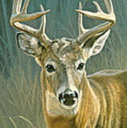 Whitetail Buck Art Print by Paul Krapf