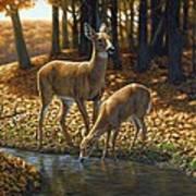 Whitetail Deer - Autumn Innocence 1 Art Print